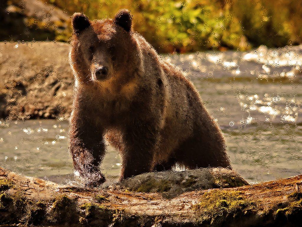 Медведь во сне