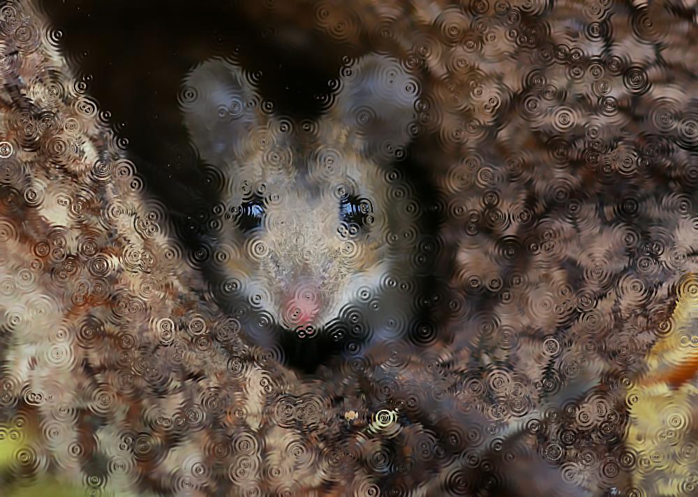 Мыши во сне